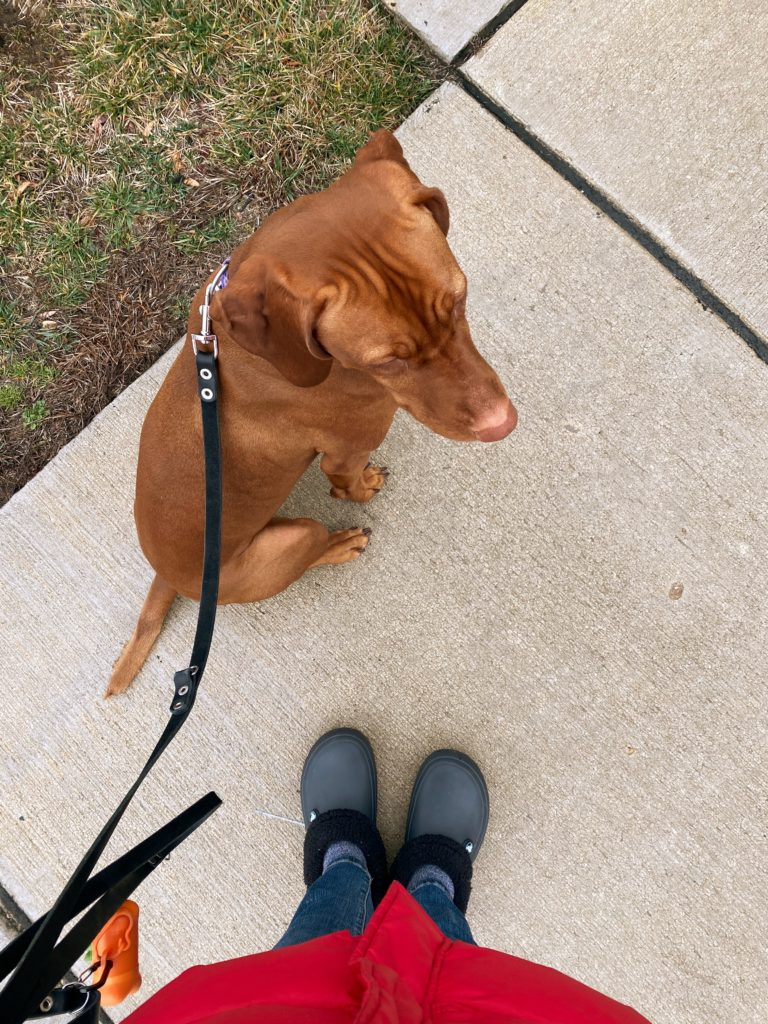 photo of feet in shoes walking on sidewalk with dog